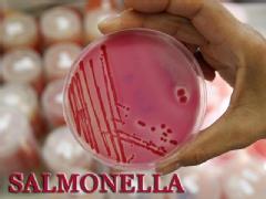 Salmonella Marler