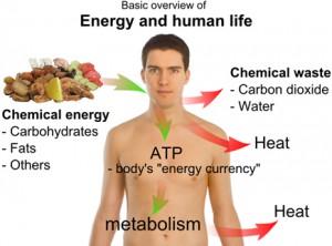 energy_and_life2